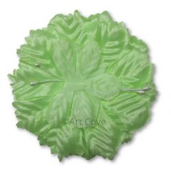 Mint Capia Capia Flowers Flat Carnation Capia Base