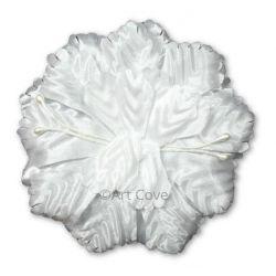 White Capia Flower